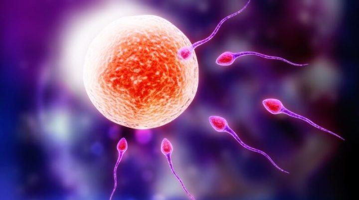 Женская овуляция происходит в среднем за 14 дней до месячных