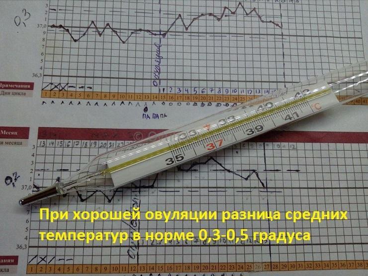 Метод измерения базальной температуры - как по графику понять овуляцию