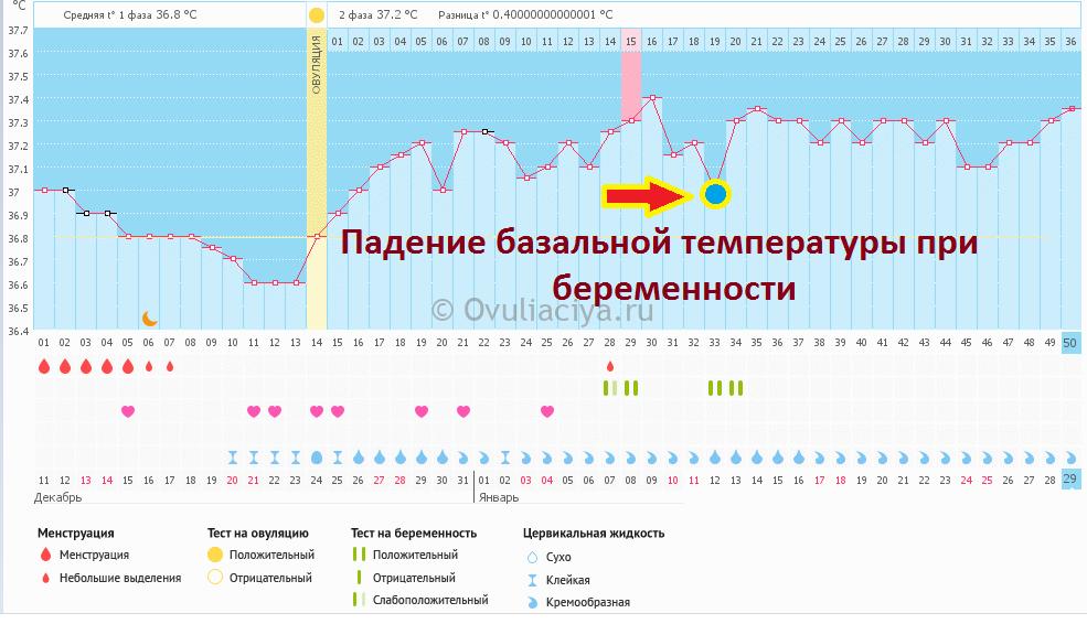 Падение БТ при подтвержденной беременности на графике базальной температуры