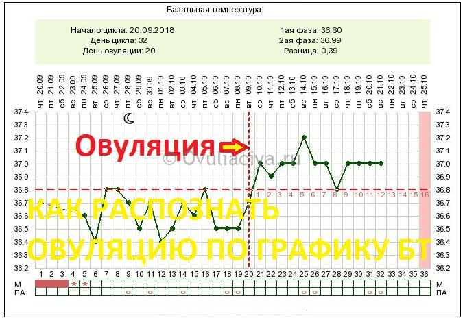 Какая температура должна быть в день овуляции