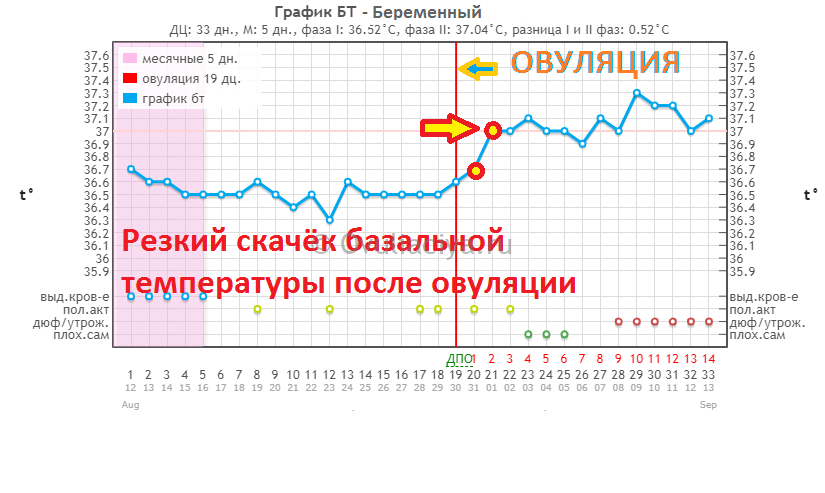 Базальная температура резко поднимается после овуляции. Повышенная базальная температура