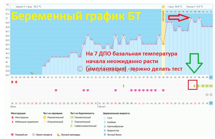 График базальной температуры с 7-го дня после овуляции начался рост БТ по отношению ко 2 фазе