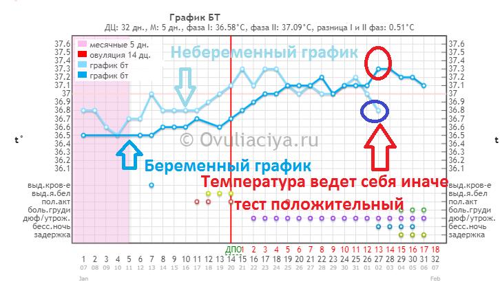 Наложение беременного и небеременного графика БТ - температура ведёт себя иначе - можно делать тест