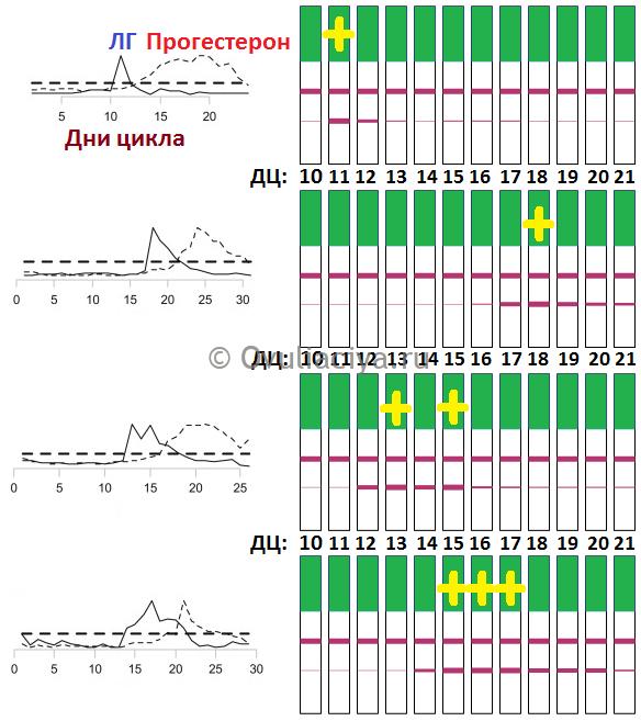 Длительность скачка ЛГ может быть разной. максимальное нормальное количество позитивных тестов - три. Чаще всего только 1-2 позитива за цикл