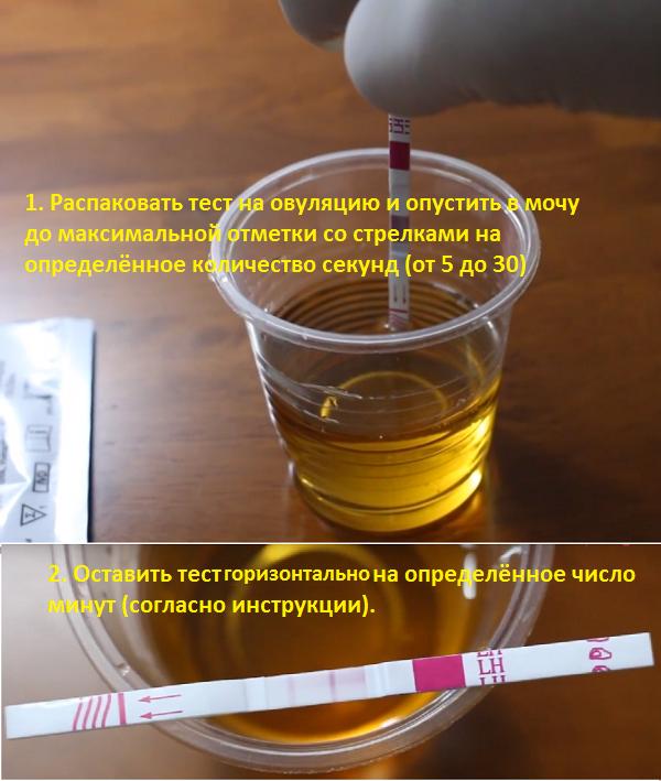 Как использовать тест на овуляцию подробная инструкция фото