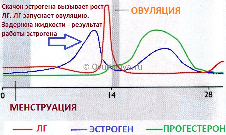 Как происходит скачок гормонов эстрогена и ЛГ перед овуляцией. Результат повышенного эстрогена - задержка жидкости и вздутие