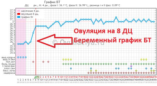 Беременный график БТ c ранней овуляцией на 8 ДЦ