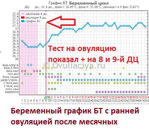 Ранняя овуляция после месячных на 8-9 ДЦ на графике БТ